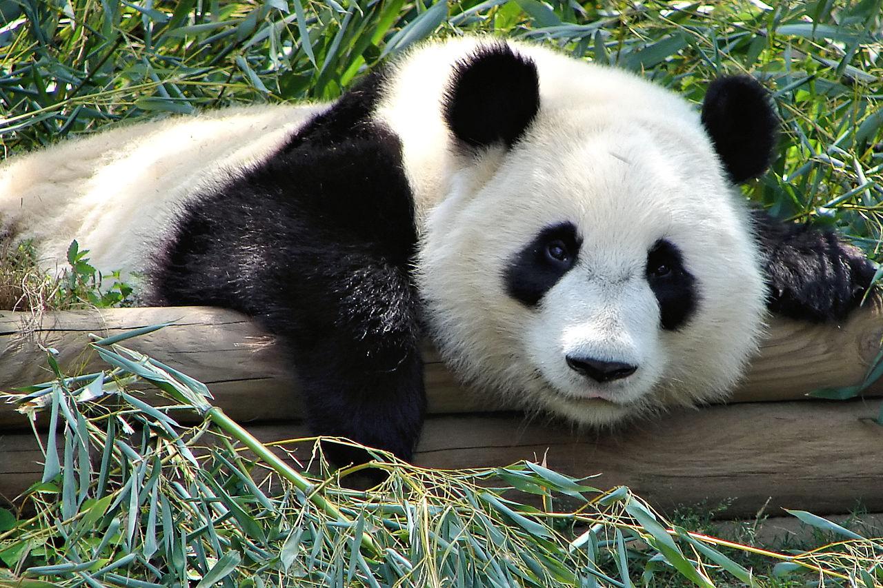 from bears to pandas : ce que la designation de l'ennemi nous dit de nous-memes